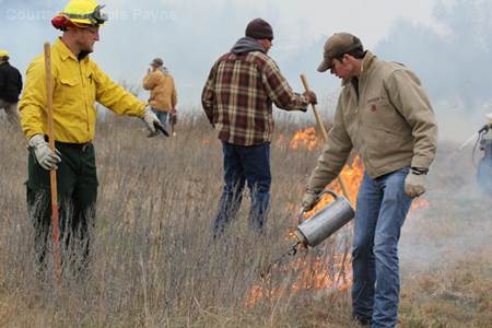 Conducting a prescribed burn.